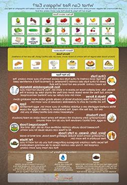 """""""What Can Red Wigglers Eat?"""" Infographic Refrigerator Magnet"""